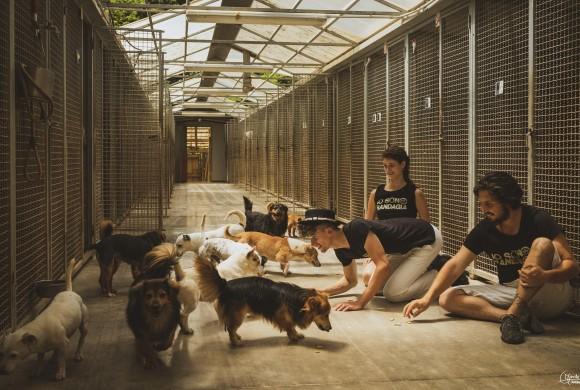 Se l'arte abita in canile,  al rifugio 281 tre giorni e tre notti di Teatro Selvatico