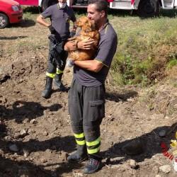 Scava scava, corsa contro il tempo per salvare il cane Ugo