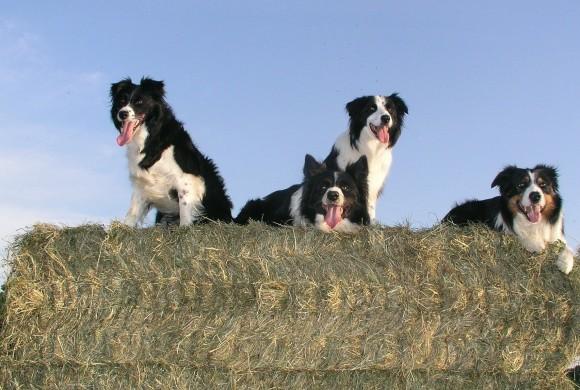 Anche i cani accusano la mezza età, ecco lo studio che lo dimostra