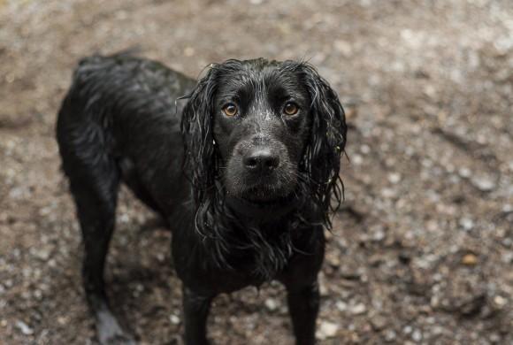 Acqua bollente sul cane del coinquilino, via al processo
