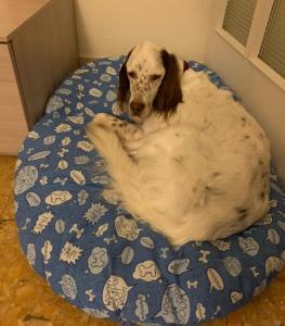 Bibe nella sua nuova cuccia a casa (Facebook / Parco degli Animali Firenze)